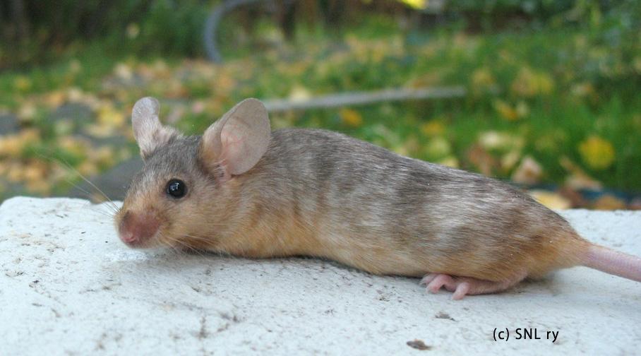 hiiret fi breeding